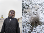 Anthony Blocker, 36, walks home from going to the store on Thanksgiving morning, Nov. 27, 2014. The lesions on his face, he said, were due to a non-protest-related incident involving running from local police. On the right, Pampas grass grown on a snowy hill on South Florissant Road on Thanksgiving Day, 2014.