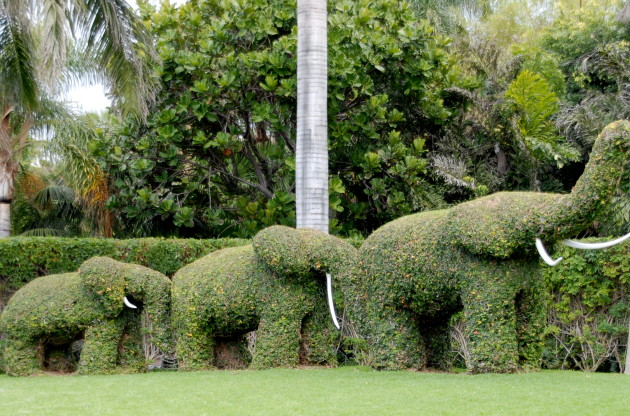 3_elephants_topiary